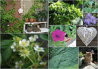 Tuin 2010 juni collage 2