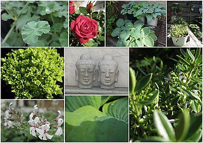 Tuin 2010 juni collage 1