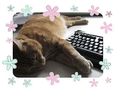 Kereltje toetsenbord 2