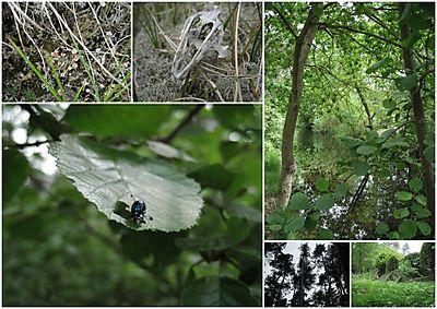 Vakantie 2010 Terschelling collage2