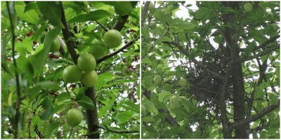 Tuin 2011-07-12 a